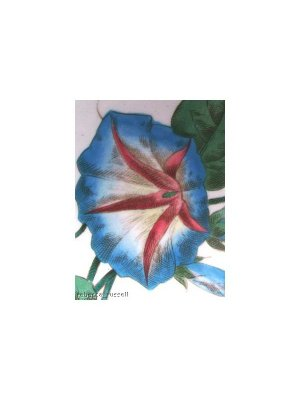 Royal Cauldon Morning Glory 11.5 inch Plate